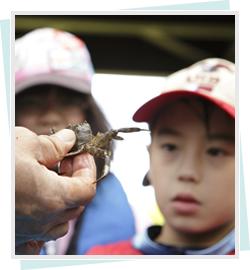 子ども農山漁村プロジェクト